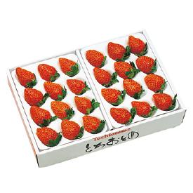 栃木産 とちおとめいちご 3Lサイズ24粒入